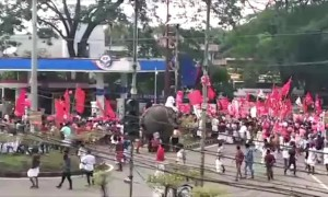 Rogue elephant causes panic during political party procession