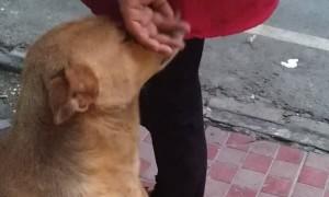 Give Me Head Pets, Human