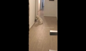 Human's best friend! Dog waits patiently for his owners to come home