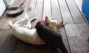 Dog amazingly befriends wild otter - the two then enjoy some play time