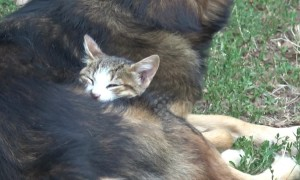 Adorable cuddly friendship forms between this cat and dog