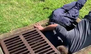 Florida fire crew rescues ducklings from drain