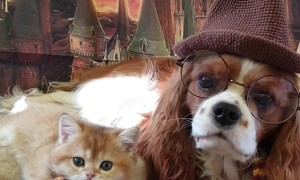 Dog and Cat Duo Dress Hogwarts Style