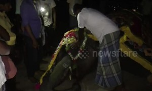 Devotees hold emotional funeral for tame elephant in south India