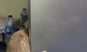 Cat Seeks Cool Refuge in Refrigerator