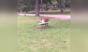 Playful calf gives little girl the best swing ride ever