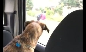 Dog cries every time mom drops son off at school