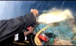 Sailors rescue turtle trapped in fishing net in Arabian Sea