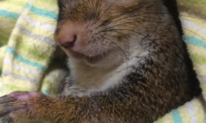Handicapped Squirrel Finds Loving Family