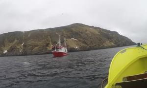 Men Free Beluga Whale from Strange Russian Harness
