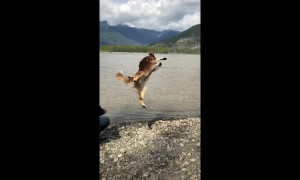 Amazing backflip from Australian Shepherd in slow motion