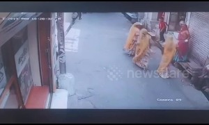 Terrifying moment raging bull rams into shoppers in northern India