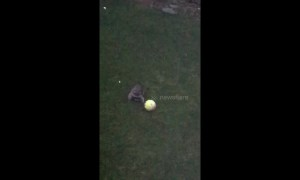 Canadian family in hysterics as hyper raccoon gets the 'zoomies' in backyard