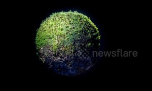 Artist creates eerie miniature world out of moss only 5cm in diameter
