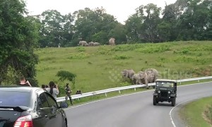 Herd of wild elephants bring traffic to standstill