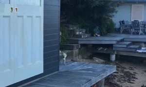 Dog and Rabbit Return from Beachfront Adventure