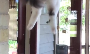 Cat Climbs Door in One Easy Step
