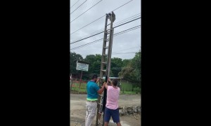 Tourists and locals team up to rescue sloth hanging from electrical wires
