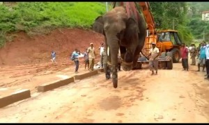 Forest officials rescue wild elephant and crane him off to sanctuary in east India