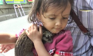Too cute! Girl rides motorscooter with pet baby civet