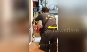 Aggressive cobra refuses to be caught, attacks firefighter