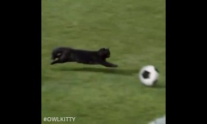 Super cat scores epic soccer goal