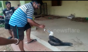 Sea bird swept hundreds of kilometres away from native grounds by Cyclone Fani