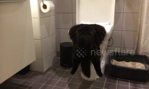 Rough night out? Cat hangs head first in toilet bowl