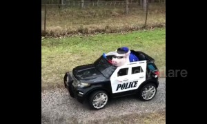 This little piggy went for a ride in a US police car