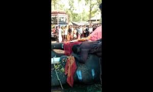 Heartbroken Indian man weeps after his elephant passes away