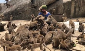 Tourist overwhelmed as dozens of wild monkeys swarm around him