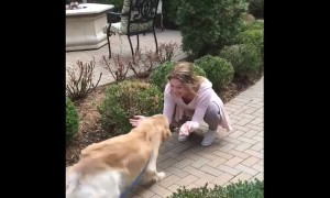 Dog can't keep composure after owner's away for two weeks