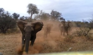 Scary moment shows elephant attacking safari jeep