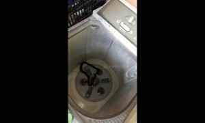 'Just ssstopping in for a wash!' Snake found in washing machine by housewife