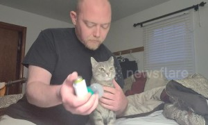 Adorable moment asthmatic cat receives special inhaler treatment