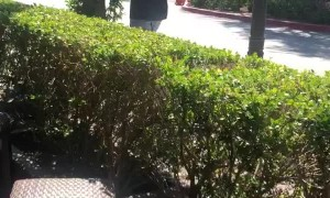 Bird Relentlessly Chases Man