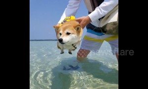 "Doggy ""air paddles"" when close to water"