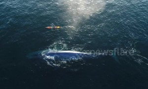 Paddle boarder has incredible encounter with blue whale