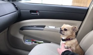 Dog's adorable tactic to not allow owner to drive away