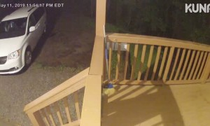 Bear Caught Playing on Porch Camera
