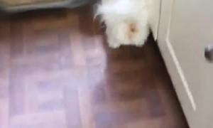 Buddy Doesn't like Bath Time