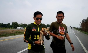 Thai paramedics rush to rescue stranded kitten on road