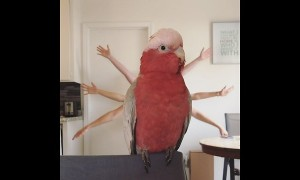 Parrot poses for 'Slum Bird Millionaire' parody video