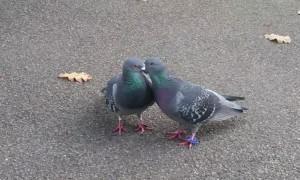 Flirty Birdies