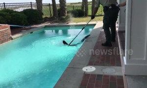 US holidaymakers find alligator in swimming pool of rental house in North Carolina