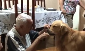 Great Grandfather Polishes the Pups Teeth