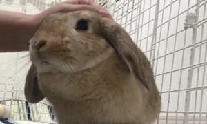 Cute bunny enjoys cuddling