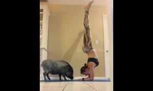 Cuddles and kisses for US pet pig while owner does yoga