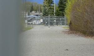 Animals Clash in Anchorage