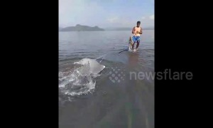 Indonesian residents rescue stranded dolphin stuck in fishnet